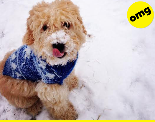 Fluffin' through the snow.